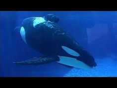 Set them free! If you look in an orca's eyes you will see and feel what they're feeling.  Long live orcas!