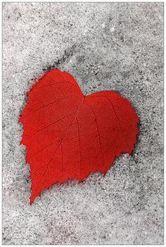 Мое сердце принадлежит тебе ... по Frider