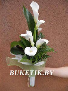 фото цветка калла композиция: 26 тис. зображень знайдено в Яндекс.Зображеннях