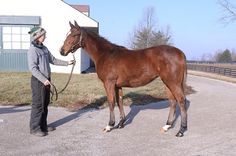 Maimonides - Littleprincessemma 2014 filly