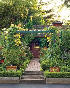 Great tips on how to grow edibles in your own yard.