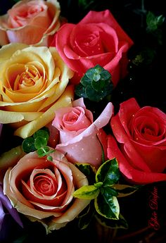 Beautiful Flowers Images, Beautiful Flower Designs, Beautiful Love Pictures, Flower Images, Beautiful Roses, Flowers Gif, Happy Flowers, Garden Shop, New Year Greetings