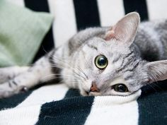 Four Ways to Keep Your Indoor Cat Entertained While You're Away | petMD