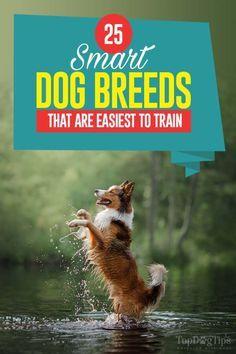 Tiny Dog Breeds, Smartest Dog Breeds, Dog Breeds Little, Best Dog Breeds, Smart Dogs Breeds, Big Dog Toys, Organic Dog Food, Durable Dog Toys, Dog Collar Tags