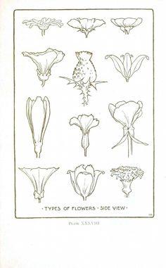 Botanical – Flower – Flower line drawings