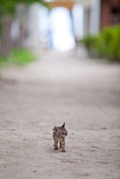 ~ big world, little me ~  questo sebra il nostro primo tigrotto da piccolo!!! miao!!!!