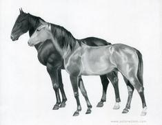 Graphite pencil drawing of two horses by Ester Wilson - http://www.esterwilson.com