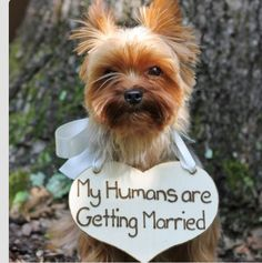 """My humans are getting married"" little dog sign. Now if he will only walk that straight line up the aisle!"