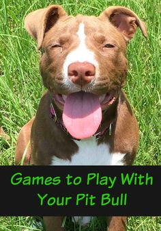 Games to Play with Your Pit Bull is part of Pit puppies - Are you bored with the same old games to play with your pit bull Check out our fun games here! You'll both love bonding while working out your energy! Chien Bull Terrier, Pitbull Terrier, Terrier Dogs, American Pit Bull Terrier, Pitbull Training, Pit Puppies, Dog Games, Puppy Care, Pet Care