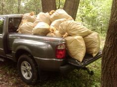 Volunteers collected this quantity of garlic mustard in a park. Good job!