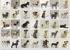 Domenica More Gordon creates Precious Pups!!!!!