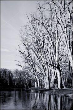 Park im Winter #stuttgart by Thomas Venugopal