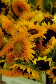 Farmer's Market sunflowers -- Oh how I love EVERY kind of sunflower.
