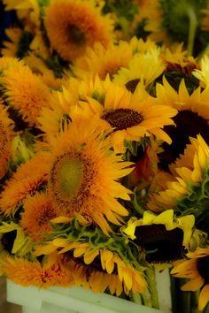 Farmer's Market sunflowers