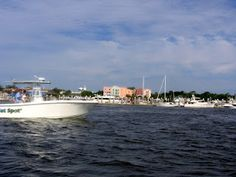 Magnificent Hope paid a visit to author Annie Keys during Amelia Island's annual Shrimp Festival.