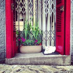 Cool cat in La Lonja. Palma de Mallorca.