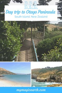 A day trip to Otago Peninsula includes driving along two scenic roads, joining an organized tour at the Penguin Place, watching Wildlife and enjoy ocean views at the headland of Otago Peninsula, visit the Scottish Larnach Castle, and enjoy the beautiful Castle Gardens. #oceania #destination #adventure #adventuretime #traveltips #travellife #daytrips #新西兰 #travelblogger #roadtrip #familytravel #unesco #thingstoknow #travelexperience #rentacar #carrental #larnachcastle #dunedin #otago #penguin Australia Destinations, Australia Travel, Travel Destinations, Amazing Destinations, Travel Inspiration, Travel Ideas, Travel Tips, Castle Gardens, New Zealand Travel Guide