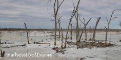 Salinity in the Wheatbelt, near Wyalkatchem. www.wheatbeltnrm.org.au