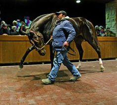 Zenyatta, gorgeous, love this photo looks like shes showing off.