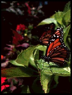 GIFS HERMOSOS: FLRES Y MARIPOSAS ENCONTRADAS EN LA WEB Gifs, Moving Photos, Gif Photo, Easter 2021, Cellphone Wallpaper, Beautiful Flowers, Butterfly, Animation, Pictures