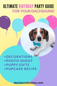 How Do You Plan a Birthday Party For A Dog?  Here are Some Simple and Fun ways to Celebrate Your Dachshund's Birthday include a puppy photo session, puppy birthday gifts, yummy pupcakes, and some puppy dog games.  #dachshund  |dachshund birthday party| Dog Birthday Gift, Puppy Birthday Parties, Puppy Party, Birthday Ideas, Dachshund Puppies, Dachshund Love, Dachshunds, Puppy Gifts, Pet Dogs