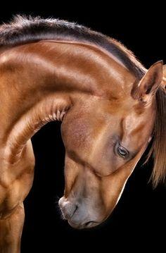 la beauté et l'élégance d'un cheval rien de plus beaux que sa