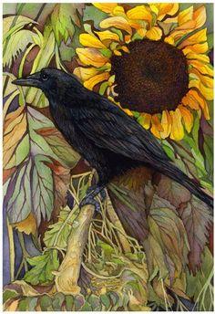 crow in a sunflower field