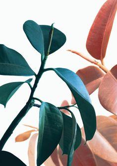 Plant Prints Printable Wall Art B Leaf Prints, Flower Prints, Art Prints, Art Zen, Poster Photo, Decoration Entree, Plant Background, Tropical Leaves, Botanical Art