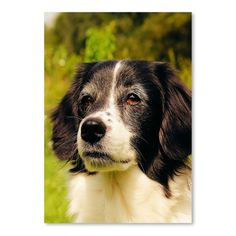 """East Urban Home Lovely Dog Pet Animal Photographic Print Size: 14"""" H x 11"""" W"""
