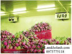Lắp đặt kho lạnh bảo quản tại Lạng Sơn