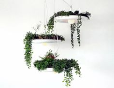 Babylon is a plantable light fixture. Create a cascading hanging garden with this cluster of three lights. The lights hang from a single large canopy and must be hung at different heights as there is approximately of overlap when hung. Sky Garden, Herb Garden, Indoor Garden, Garden Plants, Home And Garden, Indoor Outdoor, Balcony Garden, Air Plants, Indoor Plants
