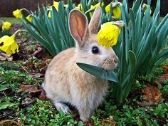 daffodil hat  japaneseflowergarden:    flowersinbloom:    (via thevoicewithoutaface)