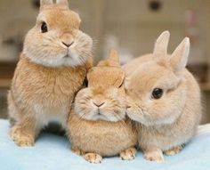 3 little bunny rabbits! Cute Baby Bunnies, Funny Bunnies, Animals And Pets, Funny Animals, Bunny Care, Fluffy Bunny, Cute Little Animals, Tier Fotos, Cute Animal Pictures