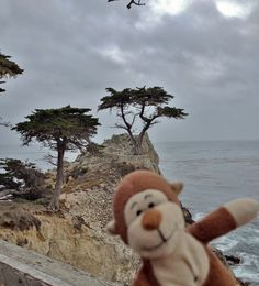I see The Lone Cypress off in the distance while on the beautiful 17-mile drive in Pebble Beach, CA. #California #PebbleBeach #lonecypress