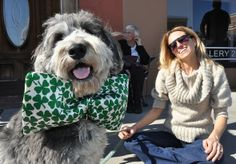 Stella, an Australian Shepherd Poodle, wore a festive bow and joined her owner, Jen Costilow, at the Mooresville St. Patrick's Day Parade Sa...