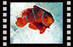 Denizlerde yaşam (Çocuk filmi 5 ) Video