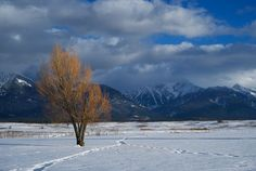 Winter in Montana -- National Geographic