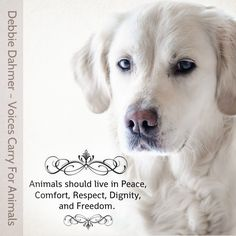 Speaking Out for those who have no voice and don't have a choice! Our voices and actions do matter. We are the animals only hope! The Animals especially Thank All of Us when they see their lives and safety turn for the better. https://www.facebook.com/groups/voicescarryforanimals/