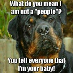 Yes I do say this about my Rottweiler but I call him my fuzzy baby & he actually responds to it! I love my little fuzzy baby even if he's not so little anymore!