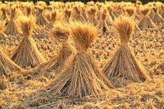 Generación de energía a partir de subproductos del arroz.