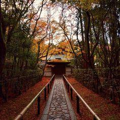 京都出身者が口を揃えておすすめする!京都「高桐院」の紅葉が美しすぎる2016