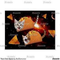 Shop Taco Cats Space Poster created by RedSamurais. Kittens Cutest, Cute Cats, Funny Cats, Taco Cat, Custom Posters, Postcard Size, Cat Memes, Kitty, Space