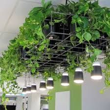 Image result for artificial green ceiling