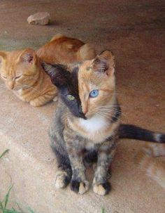 5 Pets with strange and Amazing Markings | Pic#01