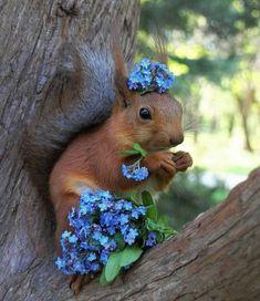 Image in Squirrels collection by Pearl Aranda Pretty Animals, Super Cute Animals, Cute Funny Animals, Funny Animal Pictures, Cute Baby Animals, Animals Beautiful, Animals And Pets, Beautiful Creatures, Funny Squirrel Pictures