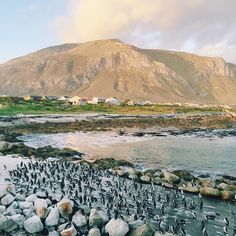 If you'd like to see penguins without all the tourists, go to Stony Point in Betty's Bay instead of Boulders Beach. Same penguins, but… Stony Point, Boulder Beach, Kwazulu Natal, Bouldering, Mount Rainier, South Africa, Mountains, Country, Penguins