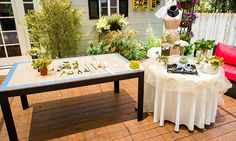 Home & Family - Tips & Products - Shirley Bovshow's Living Succulent Bouquets   Hallmark Channel  5/30