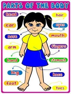 Classroom Posters - Teach English Step By Step Preschool Charts, Senses Preschool, Body Preschool, Learning English For Kids, English Worksheets For Kids, English Lessons For Kids, Teaching Spanish, Kindergarten Reading Activities, Preschool Learning Activities