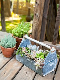 The handle on this vintage toolbox makes relocating plants to a sunnier spot a snap. #upcycle