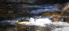 HydroBee wants to be your personal hydroelectric generator By Ben Coxworth November 19, 2013 The HydroBee generates electricity using the current of a stream or river